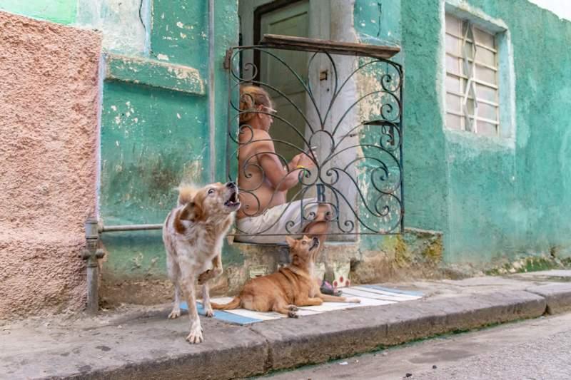 Hond op de straat van Havana