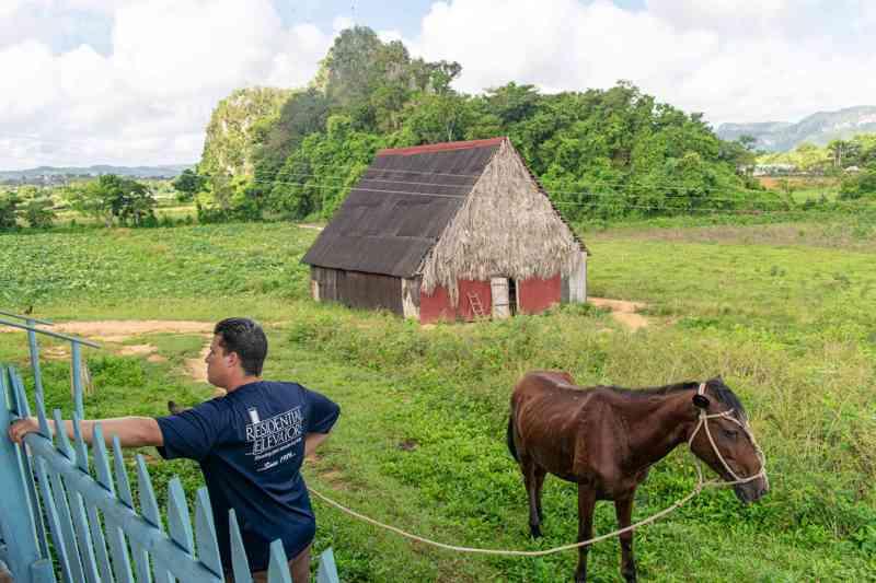 paarden in de vallei